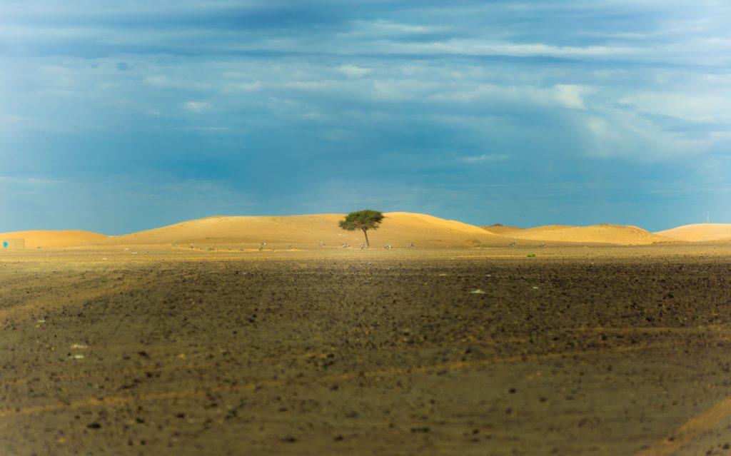 Agilidad, respuesta a los cambios del entorno, adaptabilidad